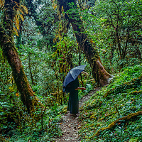 A trekker hikes through subtropical forests below the Annapurna massif in Nepal.