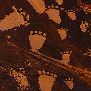 Footprint petroglyphs from the Newspaper Rock formation near Moab, Utah.