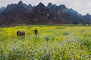 Vietnam Images- Phong cảnh -landscape- Hà Giang phong cảnh việt nam hoàng thế nhiệm Phong cảnh Vietnam