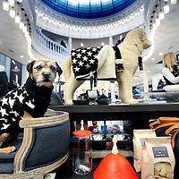 Nederland, Amsterdam , 18 november 2011..Maison de Bonneterie heeft nu een heuse hondenafdeling met allerlei accessoires voor honden..Foto:Jean-Pierre Jans