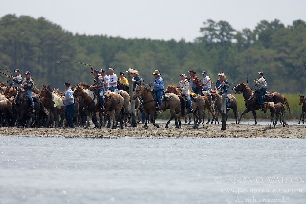 The Saltwater Cowboys herd the ponies to the shore of the channel...The 82nd Annual Pony Swim from Assateague Island across the Assateague Channel to Chincoteague Island was held on July 25, 2007.  Approximately 150 horses made the swim - from two herds (the northern herd in Maryland and the southern herd in Virginia).