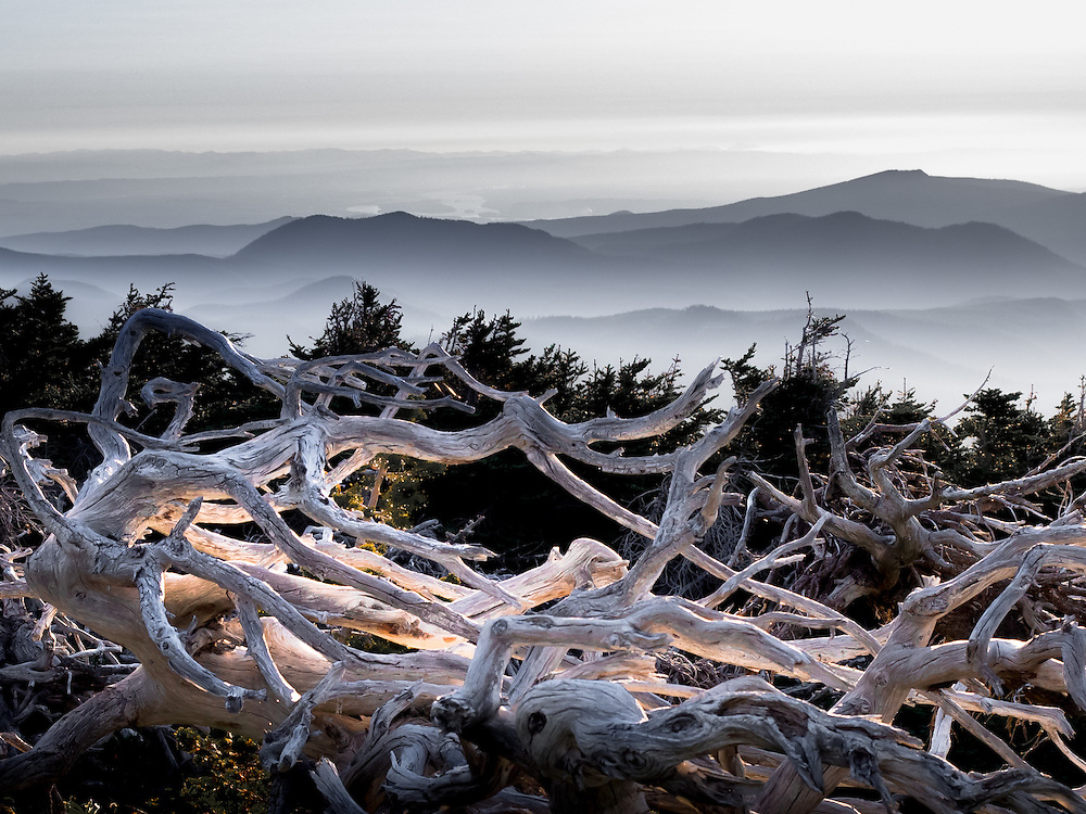 Captured while the sun was setting through low broken clouds, this carcass of whitebark pine was illuminated by a shaft of evening light and appears to be glowing from within.<br /> <br /> This photo was published in the January 2015 print edition of Biosphere magazine.