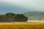 Early morning near Ennis Montana.