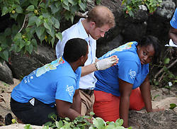 Prince Harry is shown a turtle nesting site by volunteers from a Nevis turtle conservation project on Lover's Beach on the island of Nevis during the second leg of his Caribbean tour, as he learns about the conservation efforts to protect the endangered species.