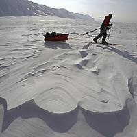 Spitsbergen Island, Svalbard Archipelago, Norway.An expedition skier crosses sastrugi on frozen Billefjord.