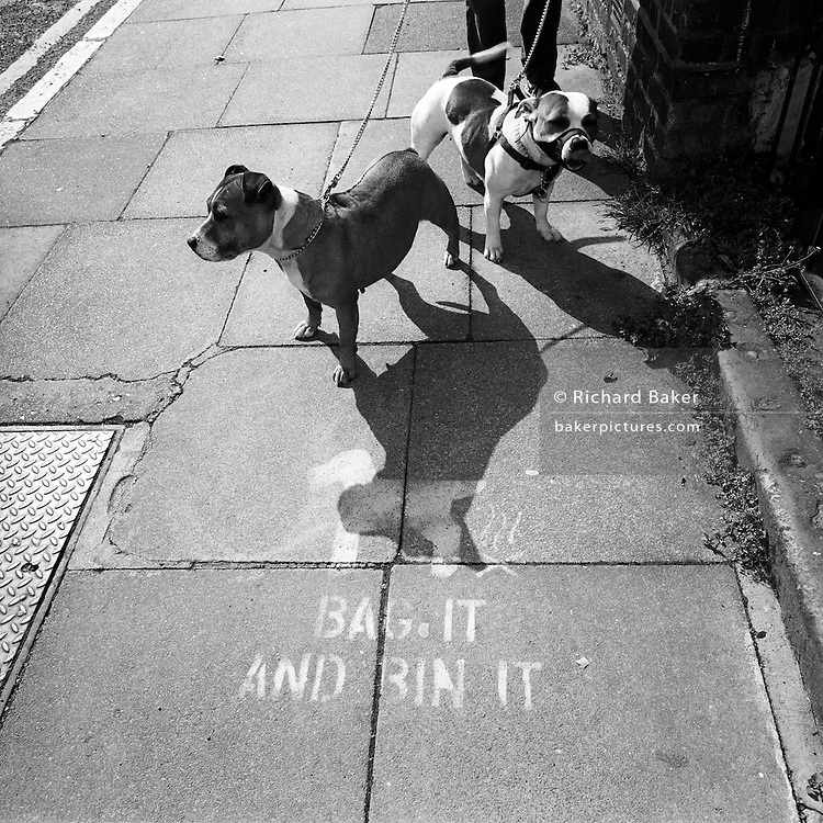 """Looking down from a person's height, we see two Pitbull dogs standing quietly on a south London street pavement. The two animals seem docile but are attached to leads held by an unknown owner. AT the dogs' feet in a stencilled sign that Lambeth, the local council has left at many locations of its streets where dog owners neglect to collect their pets' mess. Their idea was to paint the words """"Bag it. Bin it"""" to help educate this unhygienic practice. Britain's Dangerous Dogs Act bans the breeding and sale or exchange of four kinds of dog - pit bull terriers, Japanese Tosas, the Dogo Argentinos, and the Fila Brasileiros. Under the act, a dog classed as being """"dangerously out of control in a public place"""" can be destroyed. The owner can be fined and imprisoned for up to six months. If a dog injures someone, the owner can be jailed for up to two years."""
