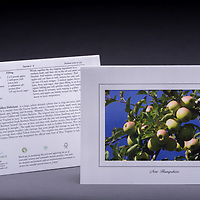 Who doesn't love apple picking during the fall in NH? <br />