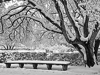 Bench and tree (Japanese Crabapple) in the Secret Garden at the Conservatory Garden in Central Park during a snow storm.