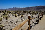 Joshua Tree National Park Desert Cactus Scenery