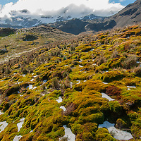 Moss thrives on a hillside above Stromness Bay, South Georgia, Antarctica. Behind is a pass crossed by Sir Ernest Shackleton during his epic expedition across the island.