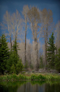 Beaver Pond - Grand Teton National Park