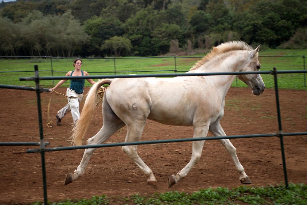 España. Islas Canarias. Gran Canaria. Teror.Mujer entrenando un caballo en el Parque Rural de Doramas..©JOAN COSTA....