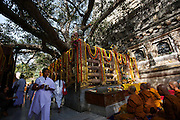 Monks and nuns from all over the buddhist world make pilgrimage to  the Banyan Tree under which the Lord Buddha received enlightenment, Mahabodhi Temple, Bodh Gaya.The temple is covered in marigolds and other flowers on special occasions, such as here on Buddha's birthday.