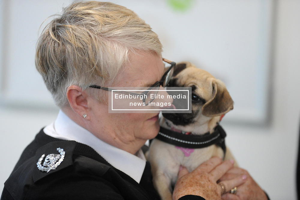 Bella the Pug with one of the SSPCA Officers<br /> <br /> (c) David Wardle | Edinburgh Elite media