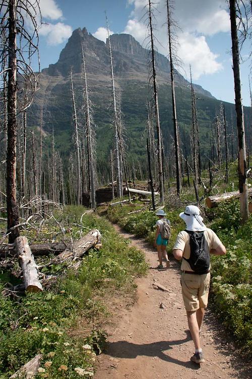 Reynolds Mountain and Burned Over Forest, Glacier National Park, Montana, US