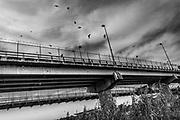 Birds circle the Roma-Ciudad Miguel Aleman International Bridge, which spans the Rio Grande and Mexico-U.S. border, Roma, Texas, USA