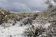 A rare snowfall in southern Arizona. This is located at Saguaro National Park west.