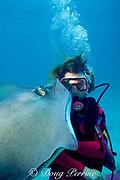 diver gets a kiss from a southern stingray, <br /> Dasyatis americana, at Stingray City,<br /> Grand Cayman Island ( Caribbean Sea )   MR 159