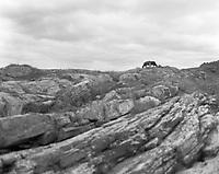 To kyr.<br /> Foto: Svein Ove Ekornesvåg