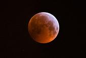 Blood Red Wolf Moon Paris