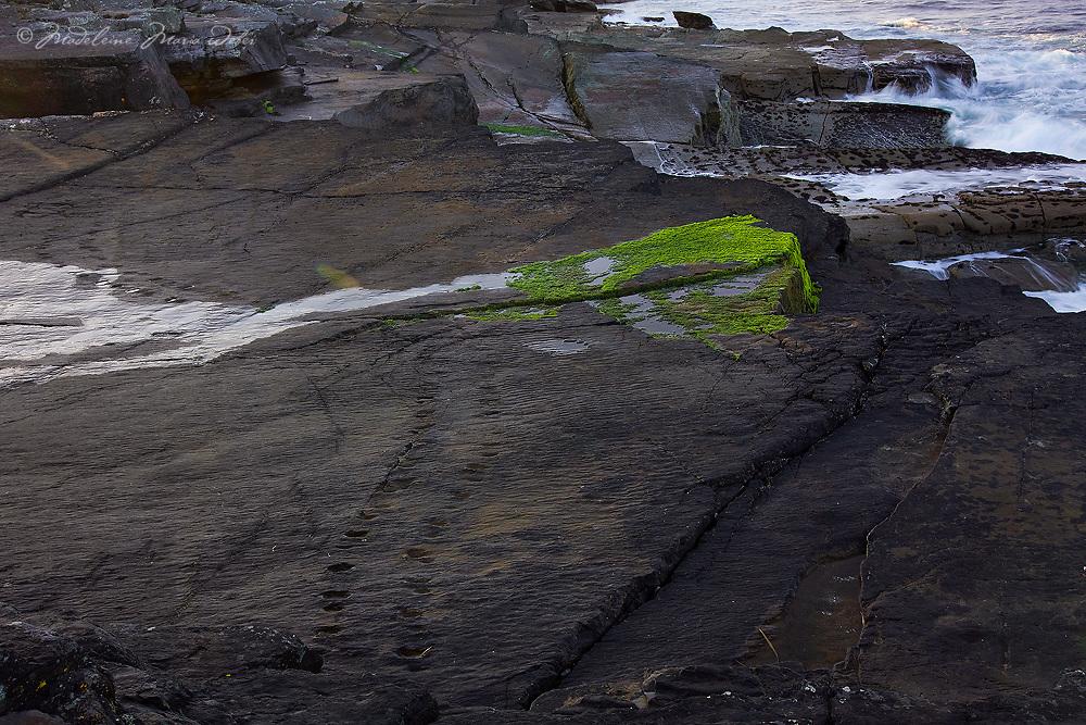 Tetrapod Track Valentia Island Cliffs, Ireland / vl156