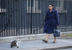 © Licensed to London News Pictures. 29/11/2016. London, UK. Secretary of State for International Development Priti Patel arrives on Downing Street ahead of the weekly Cabinet meeting. Photo credit: Rob Pinney/LNP