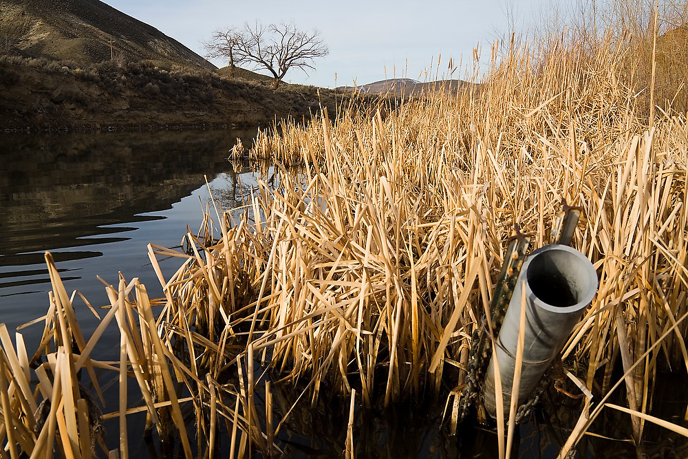 A plastic pipe sticks out of the water at McCarran Ranch, along the Truckee River near Reno, Nevada. The ranch is one of three properties so far being restored in a $20 million effort by the Nature Conservancy to revitalize the Lower Truckee River ecosystem.