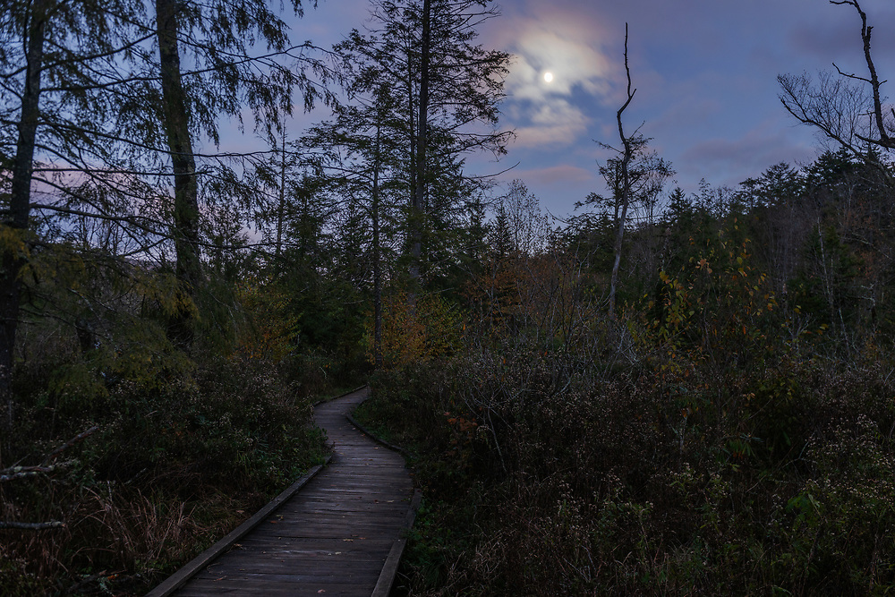 A nearly full moon is seen at twilight over Cranberry Glades. Pocahontas County. West Virginia.