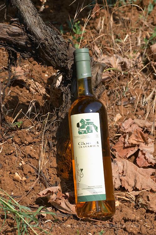 Bottle of Gangas Travarica herb spiced alcohol. By the foot of a vine in the vineyard. Vita@I Vitaai Vitai Gangas Winery, Citluk, near Mostar. Federation Bosne i Hercegovine. Bosnia Herzegovina, Europe.