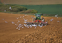Farming on the Isle of Wight
