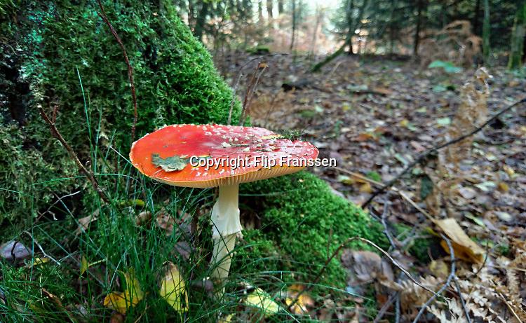 Nederland, Berg en Dal, 23-10-2019Vliegenzwammen in het bos.Foto: Flip Franssen