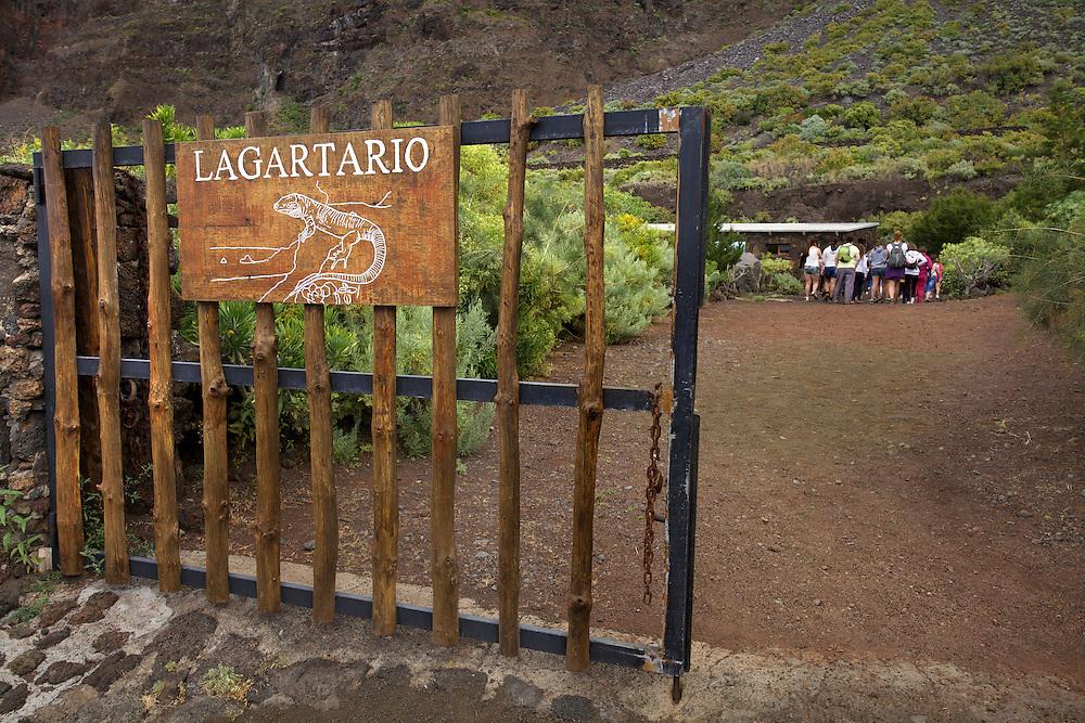 09/Abril/2014 Islas Canarias. El Hierro<br /> Lagartario