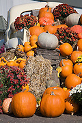 Pickup truck holding gourds and flowers from Fall harvest.