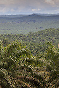 Palm Oil plantations seen from Ranau to Sepilok near A4 road, north Sabah, Borneo, Malaysia