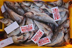 Boxes of haddock at fishmongers premises