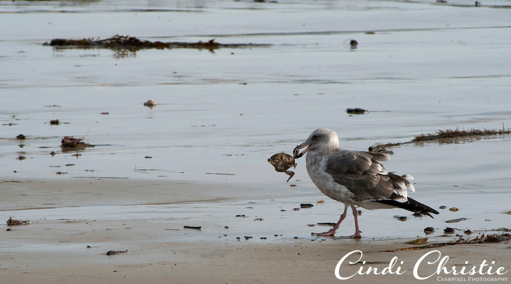 Crystal Cove State Park on Oct. 21, 2010. (© 2010, Cindi Christie/Cyanpixel Photography)