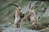 Mammals - Most popular images