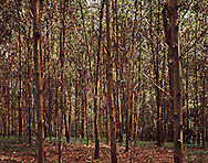 Dense forest in Tuyen Quang Province surrounding the Green Vietnam Eco Lodge, Vietnam, Southeast Asia
