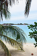 Island through palm trees - Pulau Redang, Malaysia <br /> <br /> Editions:- Open Edition Print / Stock Image