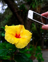 Yellow Hibbiscus Flower Being Imaged by an iPhone. Outside Marie Selby Gardens in Sarasota, Florida. Image taken with a Leica X1 (ISO 100, 24 mm, f/4, 1/100 sec).
