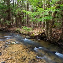 Powers Run flows through a hemlock grove in Johnsonburg, Pennsylvania.