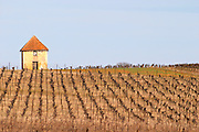 A hut called such as is called Gabinele. Domaine Mas Gabinele. Faugeres. Languedoc. A tool shed hut in the vineyard. France. Europe.