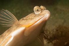 Fishes-North Atlantic_Osteichthyemy