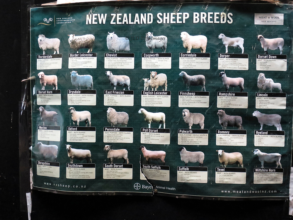 Our tour of New Zealand began in the South Island with a sheep farm.