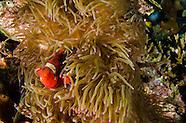 Scuba Diving Bali Indonesia