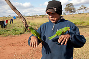 Guarani man with 2 two parrots on his hands.The Guarani are one of the most populous indigenous populations in Brazil, but with the least amount of land. They mostly live in the State of Mato Grosso do Sul and Mato Grosso. Their tradtional way of life and ancestral land is increasingly at risk from large scale agribusiness and agriculture. There have been recorded cases and allegations of violence between owners of large farms and the Guarani communities in this region.