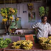 A banana seller and a white cat at a market.