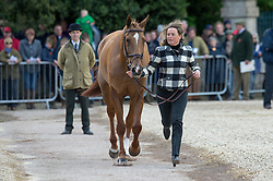 Funnell Pippa, (GBR), Redesigned<br /> First Horse Inspection - Mitsubishi Motors Badminton Horse Trials <br /> Badminton 2015