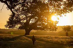 Licensed to London News Pictures. 06/10/2021. London, UK. After yesterday's torrential rains and flooding, a walker enjoys a glorious sunrise in Richmond Park south-west London this morning as weather forecasters predict a mild few days ahead with highs of 20c. Photo credit: Alex Lentati/LNP