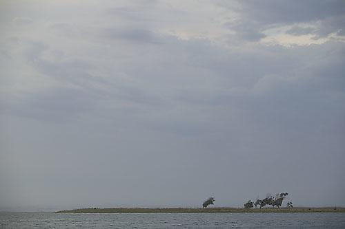 South America, Uruguay, Rocha, Laguna de Rocha